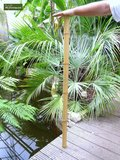 10 x Bambusrohr 120cm x Ø 12-14 mm_