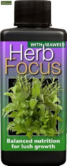 Herb focus 300 ml