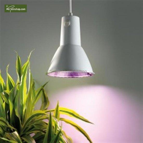 Energiesparlampe L15
